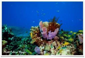éponge et corail Natiyabel