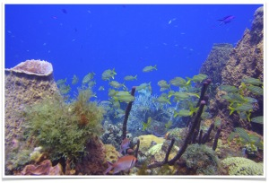 paysage sous-marin Natiyabel